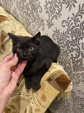 Отдам котенка Семей