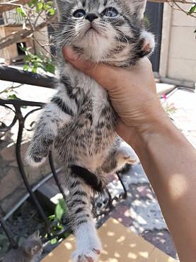 Котята в добрые руки Темиртау