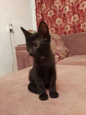 Отдам домашнего котёнка - мальчика, в добрые руки Атырау