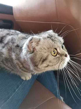 Бесплатно кошка Атырау