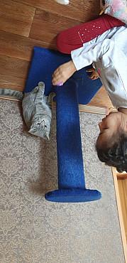 Отдам кошку Кызылорда
