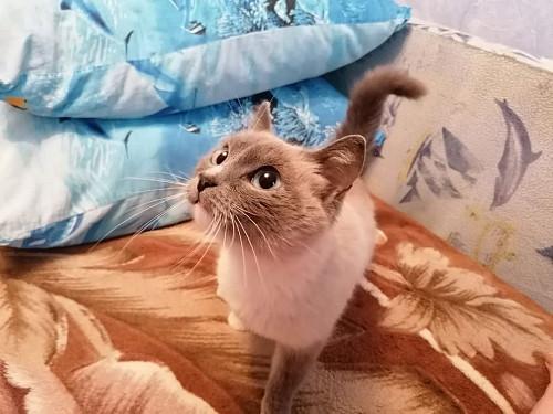 Кошечка (6мес) ищет любящую семью Темиртау