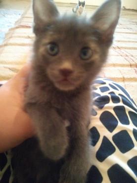 Котёнки в хорошие руки Шымкент