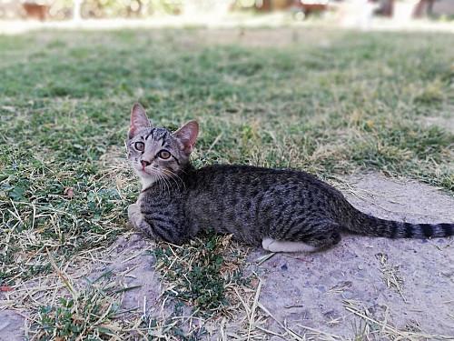 Котёнок ищет дом Шымкент