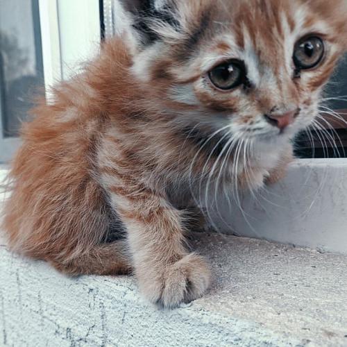 Отдам котёнка в добрые руки Кызылорда