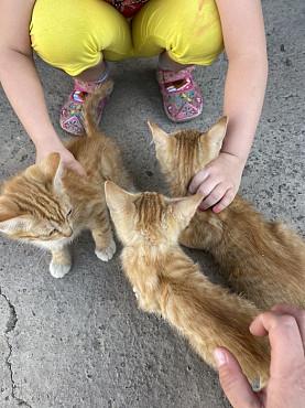 Кошка Талдыкорган