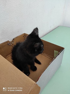 Котенка мальчика привезу сама Шымкент
