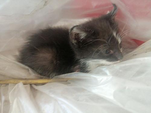 Домашние котята Шымкент