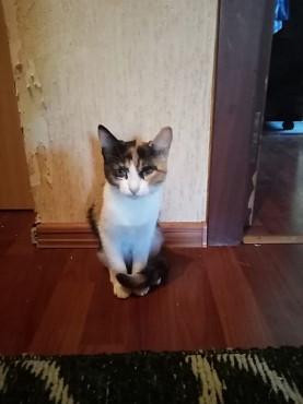 Котенок 3.5 месяца девочка Усть-Каменогорск