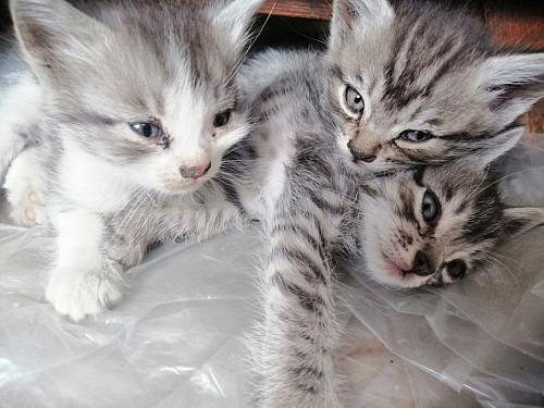 Отдам котят Алматы