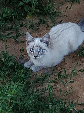 Отдам котенка Шахтинск