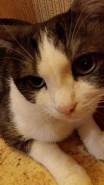 Кота в надежные руки Павлодар