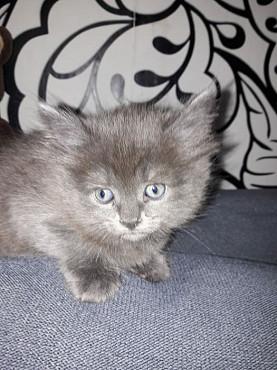 Отдам котёнка в добрые руки Актобе