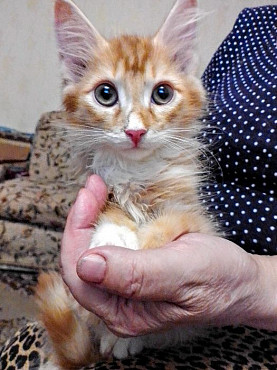 Отдается котёнок Шампусик Павлодар