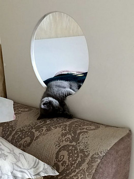 Отдам котенка Костанай