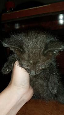 Отдам котят в хорошие руки Алматы