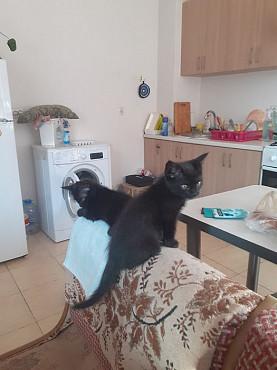 Срочно отдам котят бесплатно Алматы