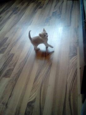 Отдаю котенка в хорошую семью.Возможна доставка. Алматы
