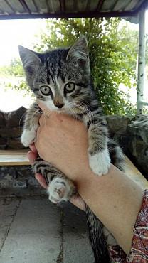 Котята ищут хозяина Караганда