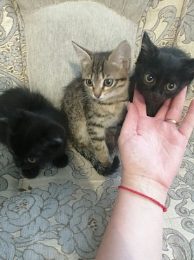 Отдам милейших котят Уштобе