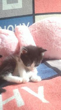 Котенок девочка Кызылорда