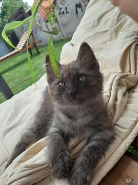 Отдам котёнка Алматы