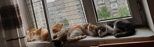 Котята Семей