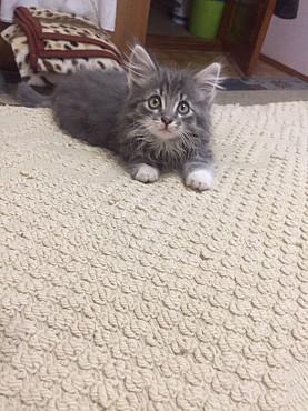 Отдам котенка в хорошие руки Алматы