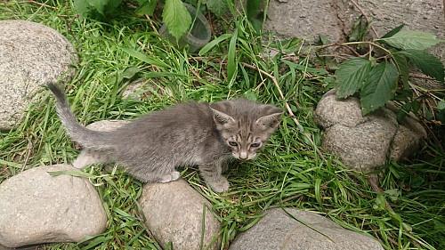 Отдадим котенка Алматы