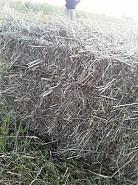 Продам  сено Талдыкорган