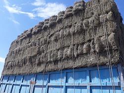 Тюковое сено житняк Семей