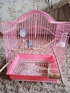 Продается попугай!! 8 месяцев Темиртау