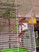 Птицы продам Семей