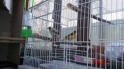 Попугаи-молодняк Кызылорда