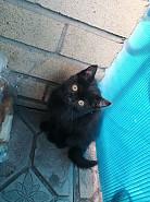 Отдам котят от плюшевой экзотки Темиртау