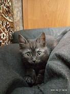 Отдам котят в очень добрые руки Темиртау