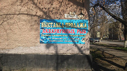 Выставка-продажа аквариумных рыб. Зоомагазин Павлодар