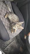 Котёнок Актобе