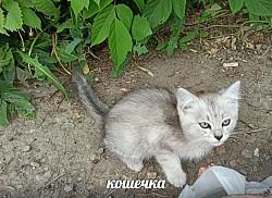 Котик и кошечка ждут добрые руки Петропавловск