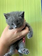 Продаю котят Караганда