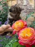 Хорошенькие котята Алматы