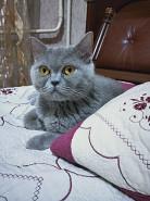 Отдам кошку в хорошие и добрые руки Алматы