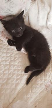 Котёнок Актау