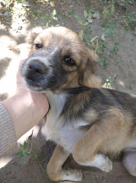 Добрейший щенок срочно ищет дом. Алматы