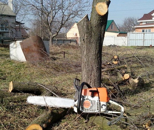 Спил деревьев, пилим дрова НЕДОРОГО Павлодар