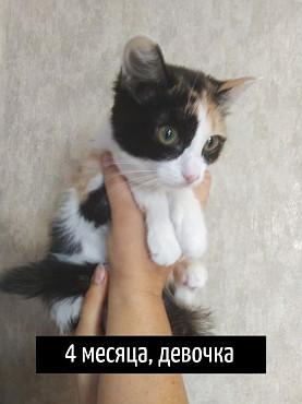 Котята 1 мес. Петропавловск