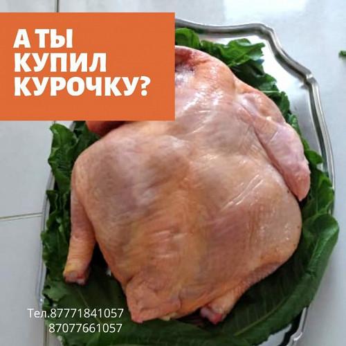 Домашняя курица бройлер Уральск