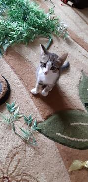 Дети кошек Экибастуз