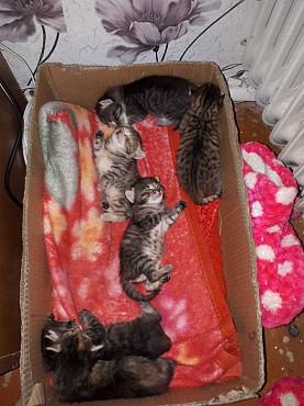 Отдам котят в любящие руки Усть-Каменогорск