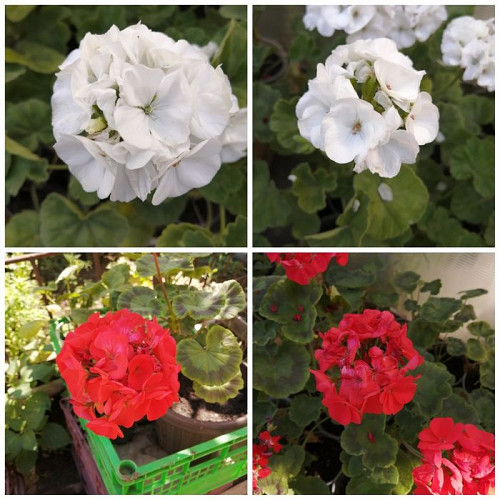 Цветы по 500 тенге Уральск